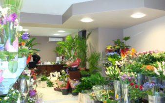 Rénovation fleuriste Fleurs 2000 à Bauvin